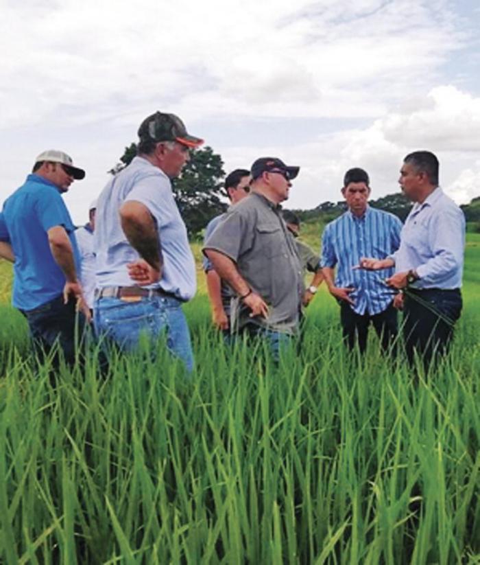 Según el exdirector del IMA, hay controles para recibir y despachar el arroz.