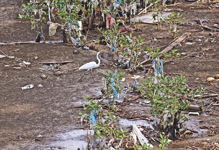 El plástico, principal agresor de los ecosistemas marinos 2