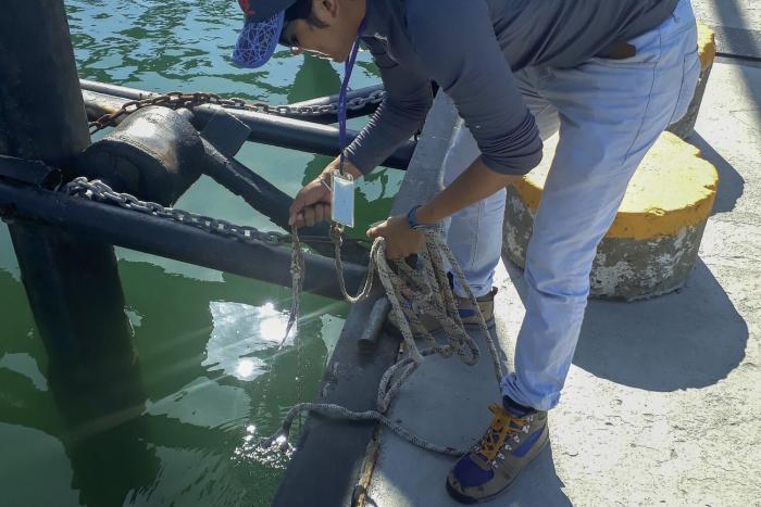 Los invasores son el almuerzo de las especies marinas locales