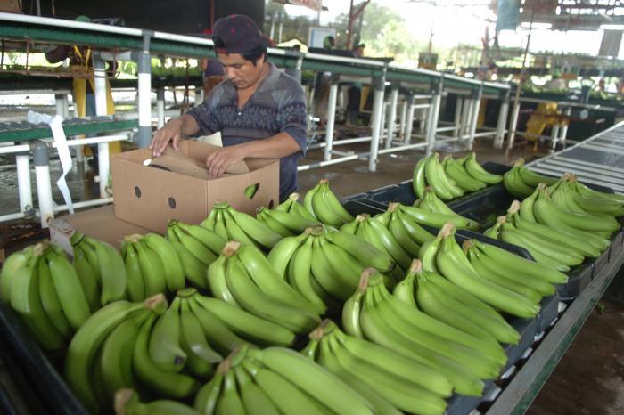 En mayo de 2018 iniciará la esperada reactivación de zona bananera