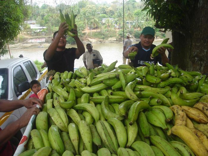 Países productores de plátano y banano se reúnen
