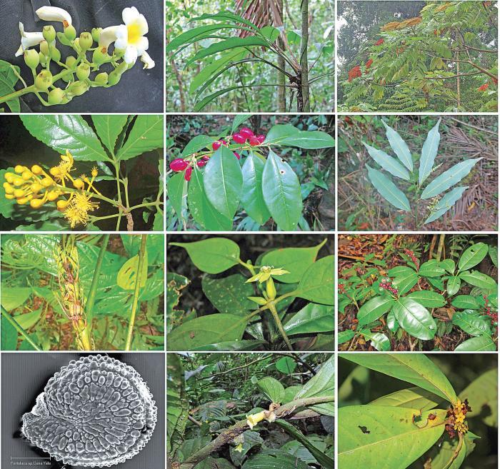 Registran 46 especies de plantas nuevas para la flora panameña