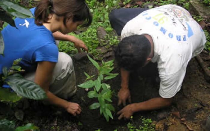 América Latina se compromete a reforestar 20 millones de hectáreas