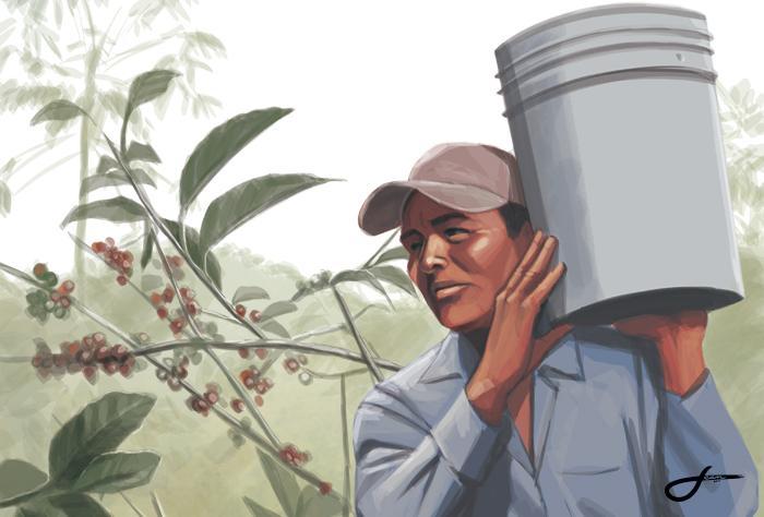 Café, el negocio injusto de Colón