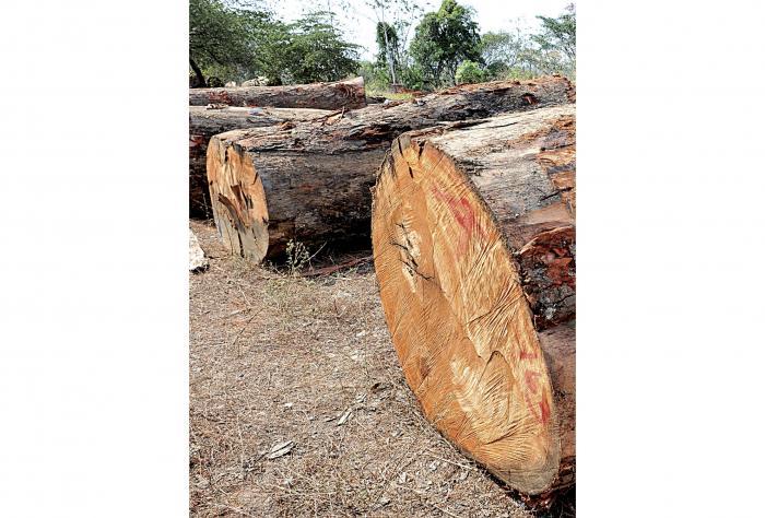 Exportaciones_de_madera_y_desperdicios_de_acero_a_la_baja-0