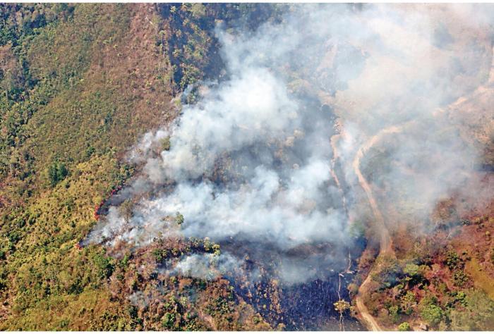 Mas_de_74_mil_hectareas_de_bosques_se_han_perdido_por_incendios-0