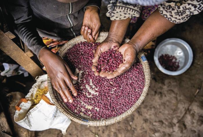 Las plantas, cada vez más amenazadas, advierte la ONU