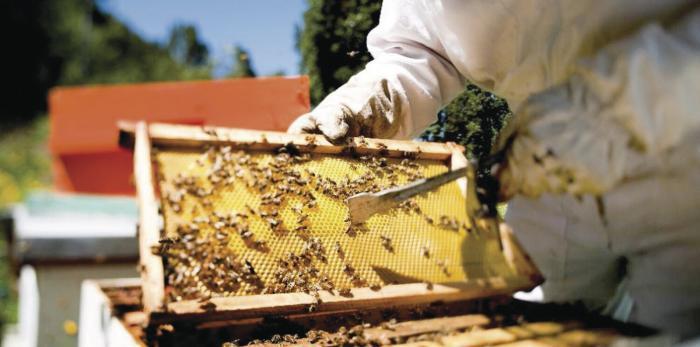 UP busca determinar la causa de la muerte de millones de abejas en sus apiarios 0