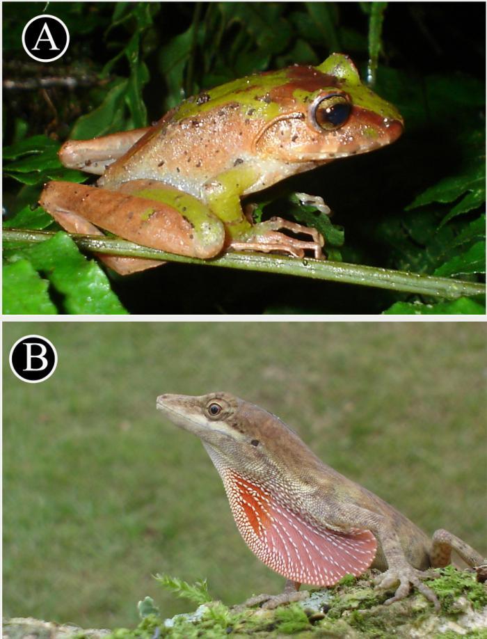 Especie endémicas y las más comunes durante el estudio.