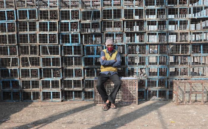 El Ministerio de Pesca, Ganadería y Lácteos indio sumó este lunes a Nueva Delhi, el occidental Maharashtra y el norteño Uttarakhand, en la lista de estados indios donde se ha detectado la gripe aviar,