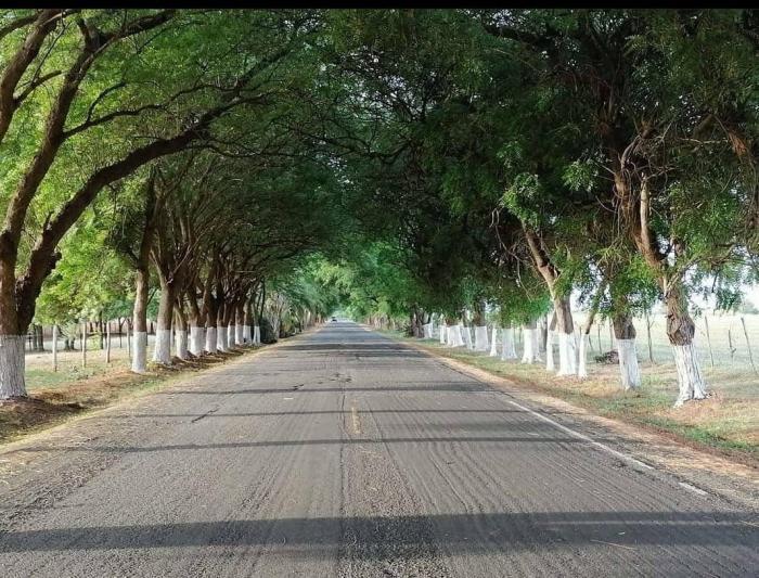 Vista del 'Paseo Blanca Mejía' en Guararé.