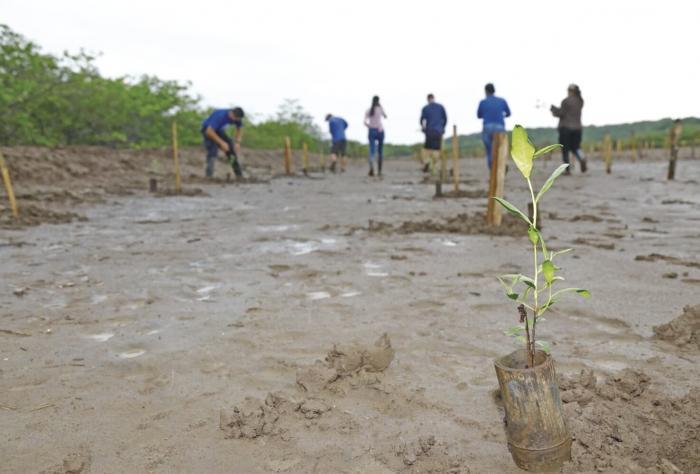Panamá sigue impulsando estrategias para la protección de manglares