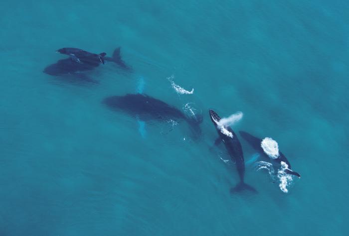 El avistamiento de ballenas y delfines promueve el turismo sostenible