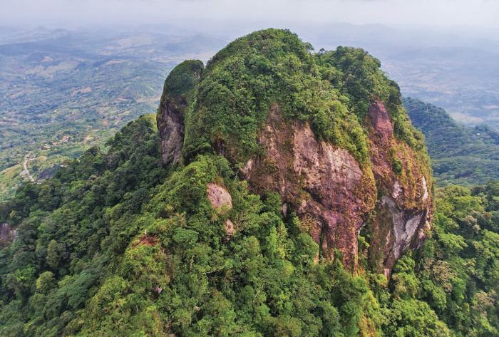 El patrimonio verde y sus bondades ecosistémicas