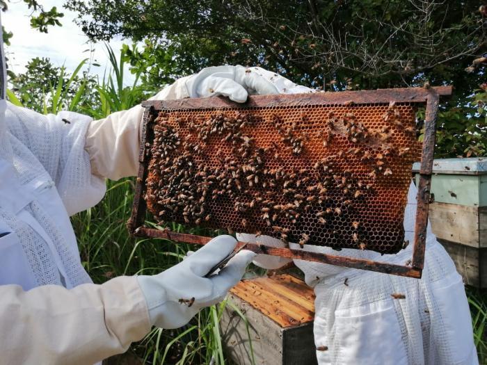 Tropikos Farms, un proyecto apícola que nació en una pandemia y se desarrolló en Olá