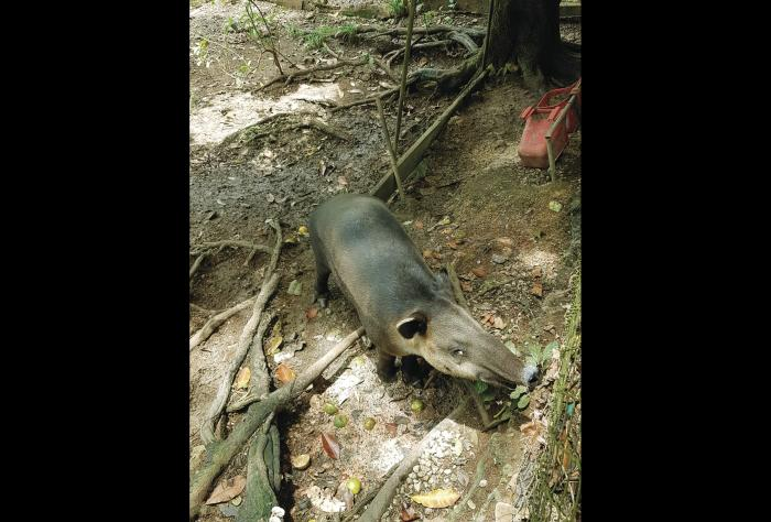 Los zoocriaderos como una vía para la conservación de especies