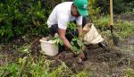 Conmemoran los 500 años de Panamá con la siembran árboles en el Refugio de Vida Silvestre La Barqueta