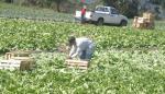 Productores de tierras altas se querellan de Barletta, presidente de la Cámara de Comercio