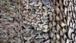 Un tipo de raya se convierte en el pez marino más amenazado del mundo