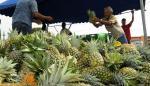 Defienden la agricultura campesina para la soberanía alimentaria