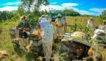 Investigadores crean el primer registro de mortandad de abejas en Latinoamérica