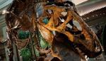 """Museo de Washington mostrará un esqueleto auténtico de un """"Tyrannosaurus rex"""""""