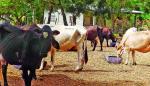 Panamá inicia plan para monitorear la sequía agrícola