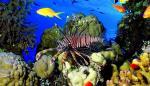"""Promueven en Panamá consumo del pez león, una """"delicia"""" que amenaza el Caribe"""