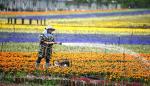 Compra de flores se convierte en hábito en China