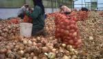 Ley panameña no prohíbe el reempaque de alimentos frescos importados