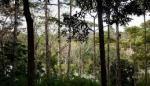 ONU: Panamá contará hasta 2020 con 27 toneladas de carbono forestal