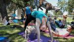 El yoga abre sus puertas a los animales, domésticos y de granja