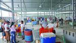 Mercado de Mariscos operará en una galera