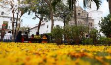 En las últimas semanas, la ciudad de Panamá se ha visto pintada del color amarillo que ofrece el florecimiento del Guayacán
