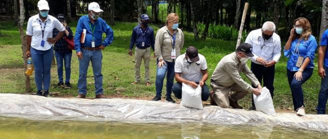 Cría de peces provee proteínas e ingresos económicos a pobladores de Omar Torrijos Herrera, Colón