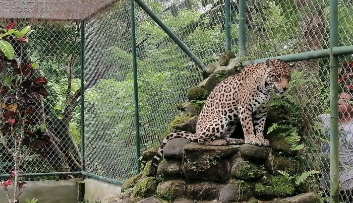 Zoológico el Níspero