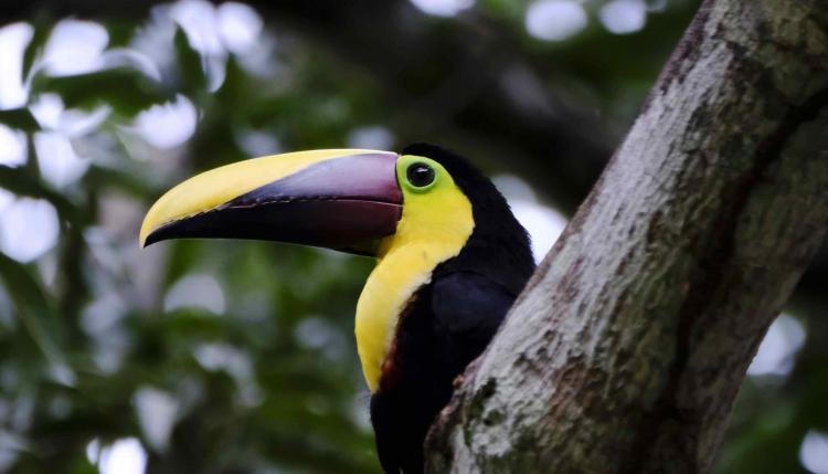 Los corredores biológicos, que abarcan el 33 % del territorio de Costa Rica, son un puente de conservación de la biodiversidad en este país y además contribuyen al desarrollo sostenible de las comunidades rurales.