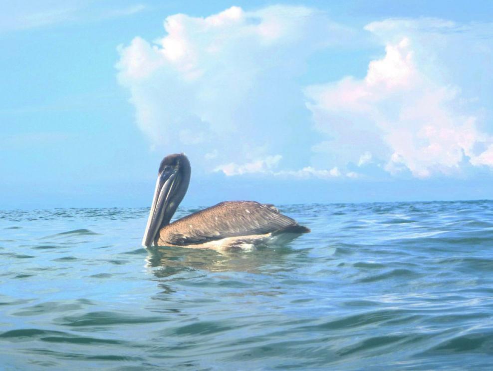 Adorno en el mar...