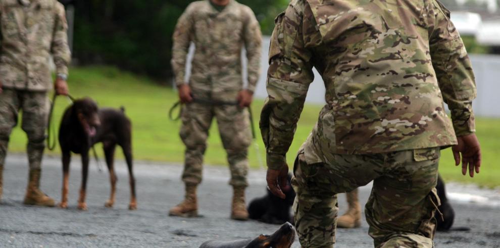 La Policía Nacional entrena perros