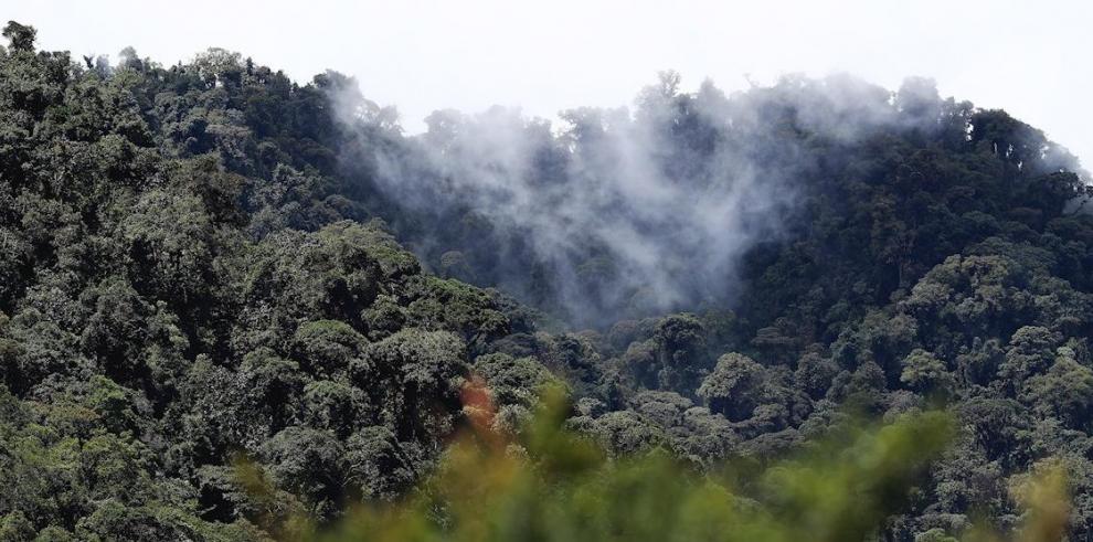 Reserva Yanacocha, Ecuador
