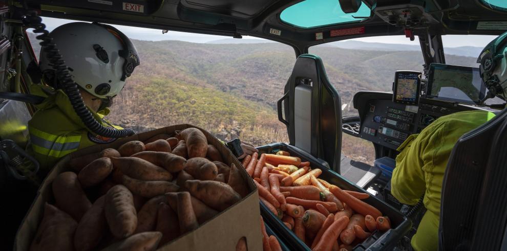 El Gobierno de Nueva Gales del Sur está instalando cámaras para observar el consumo de la comida por parte de los animales