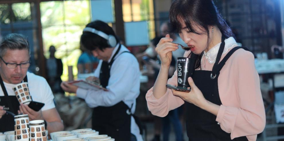 Jueces internacionales escogen hoy los 16 mejores lotes de cafés geisha