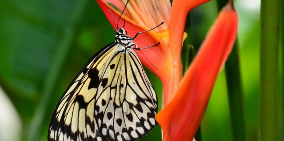 Exhibición dedicada a la flora y fauna panameña