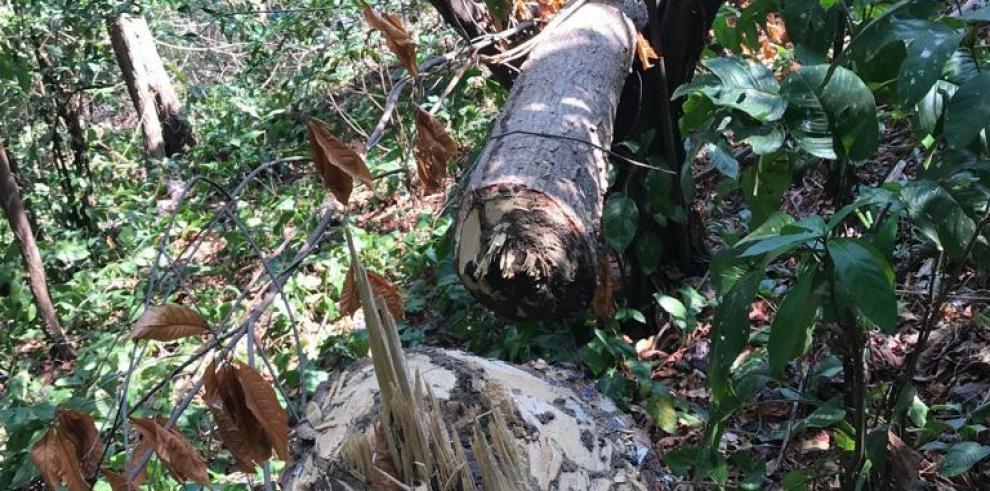 MiAmbiente acoge denuncia ambiental relacionada con isla Boná
