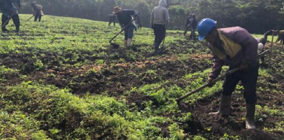 Gobierno saldará deuda con más de 12 mil productores para reactivar el sector