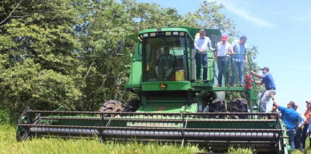 Descartan importación de arroz por desabastecimiento