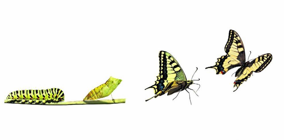 Los insectos desaparecen y su extinción amenaza al mundo