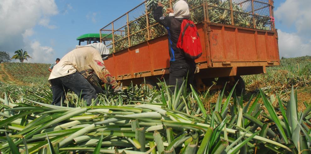 FAO pronostica alza en la producción mundial y el comercio de frutas tropicales