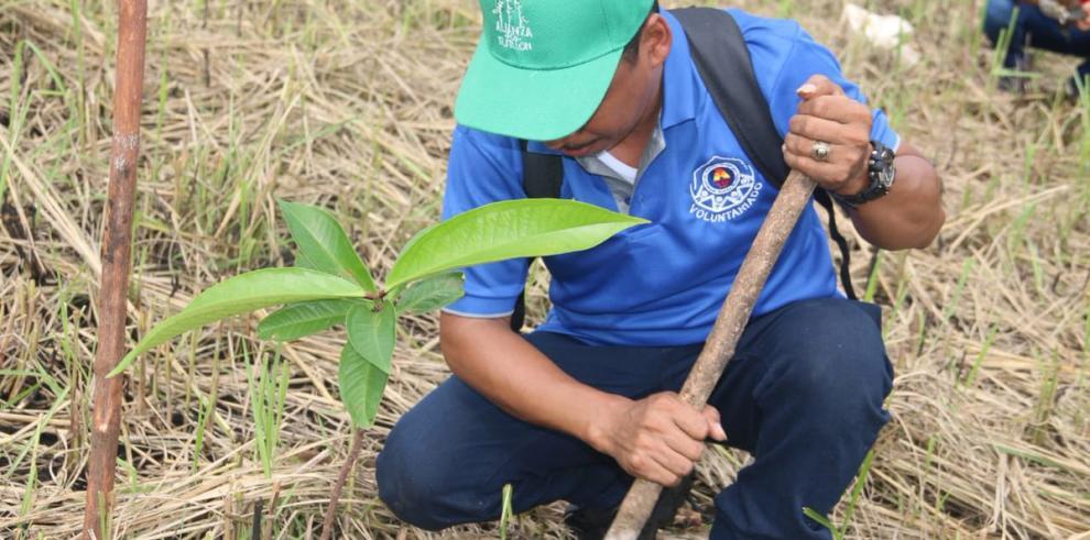 El Día Nacional de la Reforestación una lucha verde por el país
