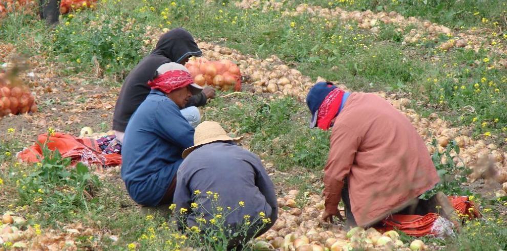 Ocde y FAO pronostican alimentos más baratos y más producción